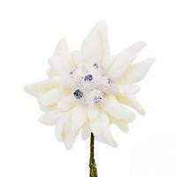 f81d3269d4f0 Edelweiss Boutonniere Buttonhole Flower Fort Belvedere