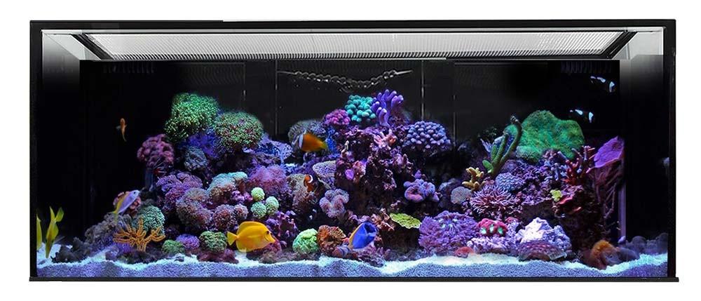 Innovative Marine NUVO 170 INT - 170 Gallon Aquarium w/ Internal Overflow