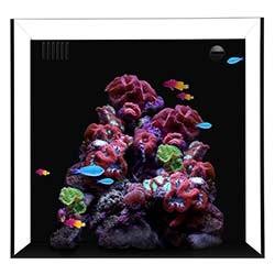 Cube 10 Starphire Ultra Clear 10 Gallon Aquarium - Waterbox Aquariums