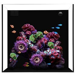 Waterbox 20 Cube - Starphire Glass 20 Gallon Aquarium