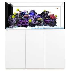 Peninsula 6025 Waterbox Aquariums - 183 gallons - White