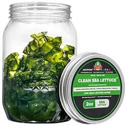 Clean Sea Lettuce - Live Macroalgae Ulva Lactuca Tennis Ball 2 oz - Algae Barn