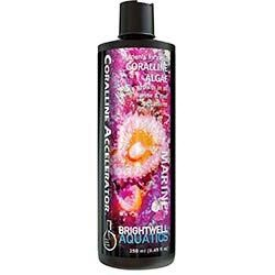 Coralline Accelerator Nutrients for Coralline Algae Growth (500 ML) - Brightwell Aquatics
